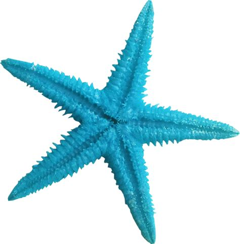 starfish clip blue starfish clipart www imgkid the image kid has it
