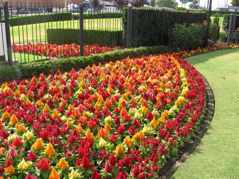 www chopcuthaircuts cim garden trends for 2016 gardening trends of 2016 garden