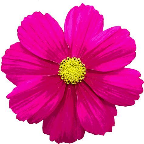 blossom bloom flower  image  pixabay