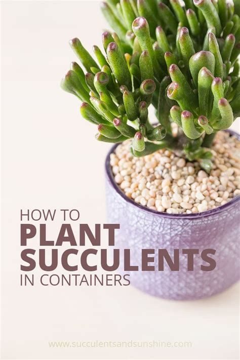 How To Propagate Cacti Succulents Apartment Therapy - 2279 best gardening inspirations images on