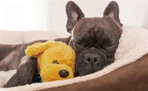 how often should puppies sleep let sleeping dogs lie why your must feel safe baywoof