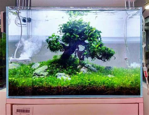 aquascape anubias small treescape with handmade bonsai tree and anubias mini