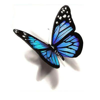 blue butterfly tattoo designs best 25 blue butterfly ideas on blue