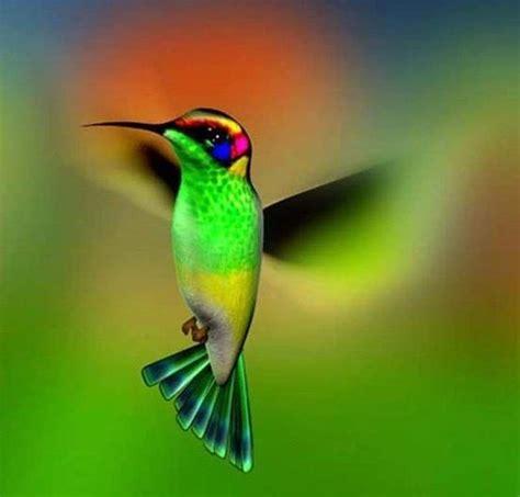 colorful hummingbirds colorful hummingbird i birds
