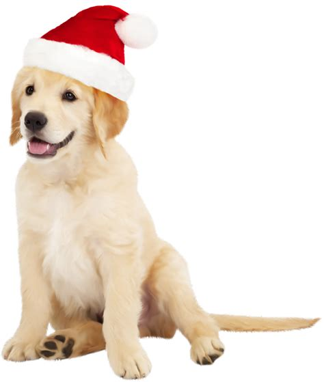 santa hats for dogs with santa hat png clipart best web clipart
