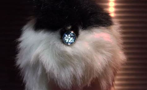 Are Cats The New Must Accessory by The Must Accessory For Your Cat