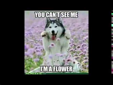 funny dog memes  youtube