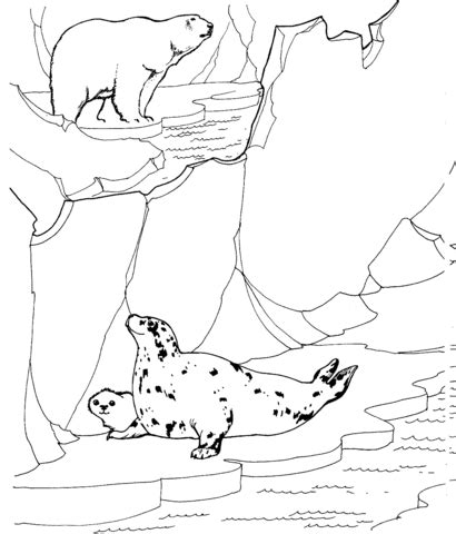 Polar Bear Hunting For Ringed Seals Coloring Page Polar Animal Coloring Pages