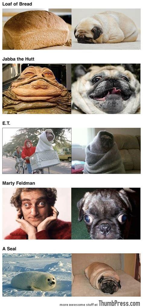 pugs that look like things pugs that look like things