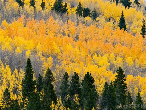 what trees provide the best fall colors with pictures