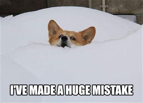Corgi Meme - 7 times corgi memes got you through your day