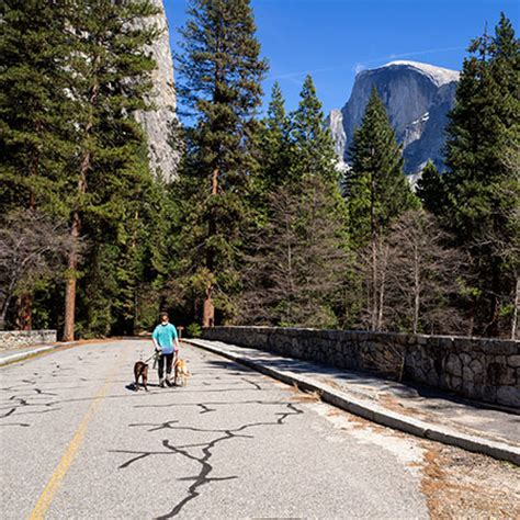 are dogs allowed in yosemite pets yosemite national park u s national park service