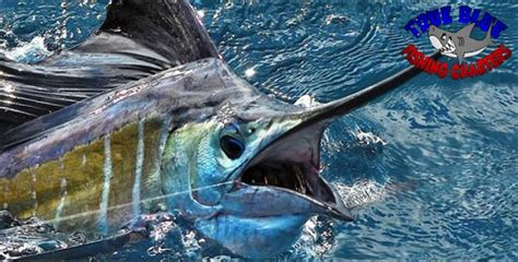 what charter boat fishing charters mackay qld fishing charters guides australia tasmania
