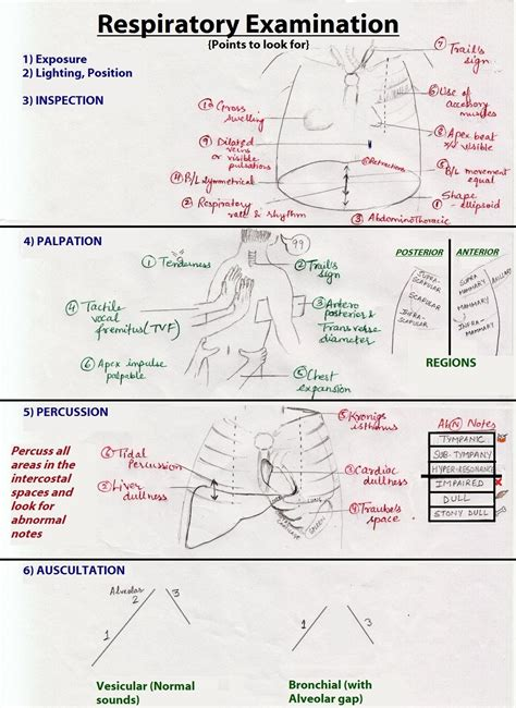 How To Document Lung Sounds
