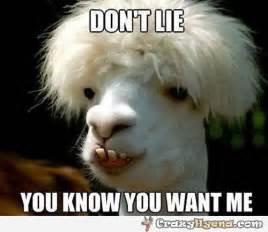 Funny Llama Memes - funny looking llamas memes