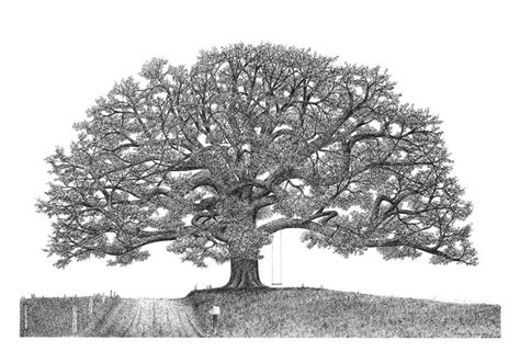 oak tree drawing the importance of family ink drawings drawings and tattoo