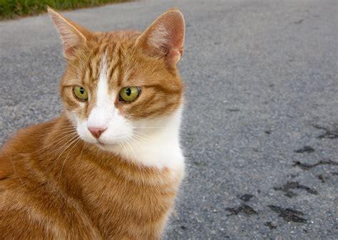 un gato a cat 842635095x fotoğraf hayvan fauna burun g 246 zler bıyık omurgalı kedi g 246 zleri sokak kedisi tekir kedi