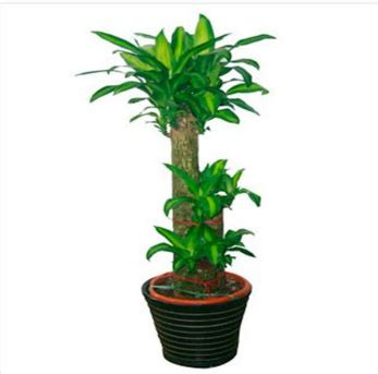 plants for bedrooms feng shui money plants feng shui