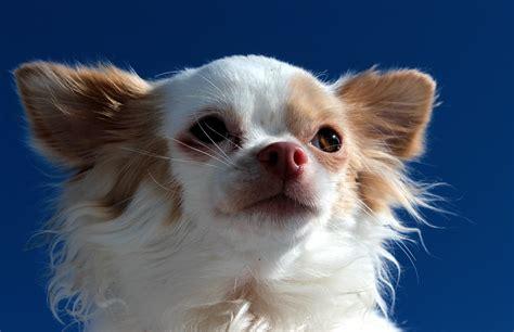 perro piso peque o ventajas de tener un perro peque 241 o mi perro info