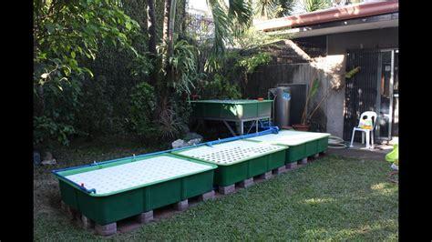 indoor aquaponics fish tank system works