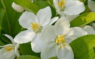 50 perfect plants for a family garden | the telegraph