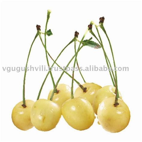 Cherry White iqf frozen white cherry products turkey iqf frozen white