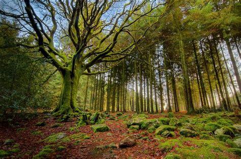 imagenes de bosques increibles los bosques m 225 s bellos del mundo