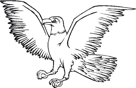 coloring page harpy eagle free coloring pages of harpy eagle