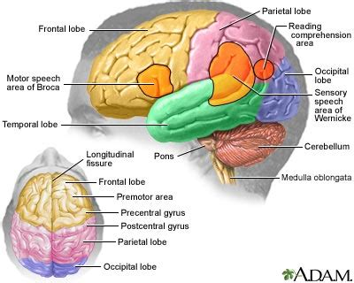 sections of the brain and what they control brain functions and brain areas mybraintest