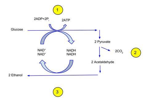 biokatalis adalah biotransformasi wikipedia bahasa indonesia ensiklopedia