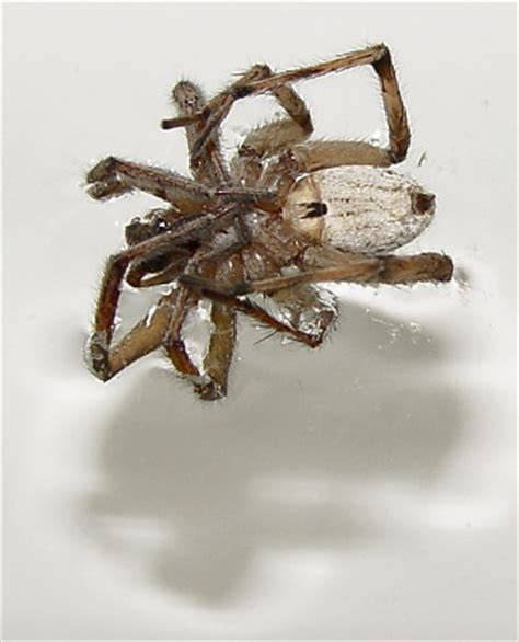 woodpress » blog archive » why spiders curl up when they die