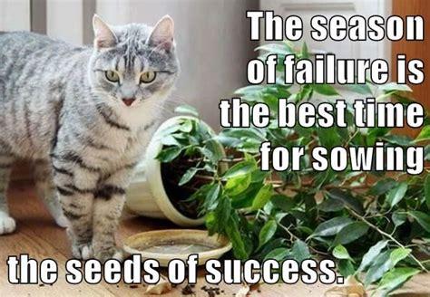 Success Cat Meme - 337 best images about growth mindset memes on pinterest