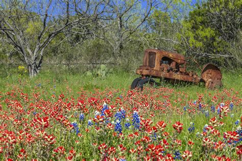 country buffets time for hill country bluebonnet tours