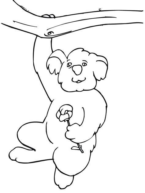 coloring page koala free printable koala coloring pages for