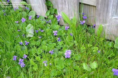 Plant Identification Closed Please Identify Purple Purple Garden Flowers Identification