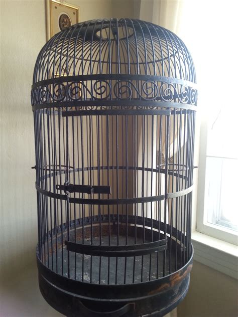 large bird cages large decorative bird cages for sale bird cages