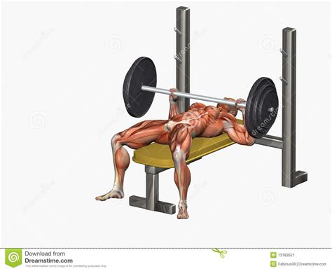 body ch bench press human body at bench press stock illustration image of