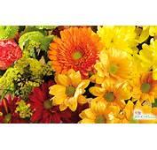 Fall Flower Wallpapers For Desktop  WallpaperSafari