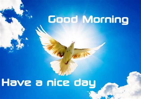 A Day Bilder by Morning Wishes With Birds Pictures Images Page 20