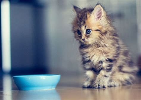 wallpaper pusy cat cute cat wallpapers lovely animals hairy animals