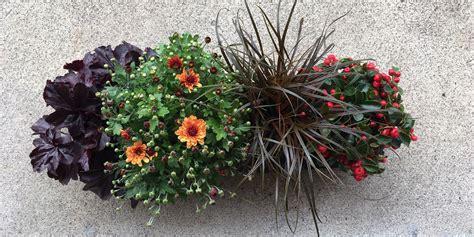 Herbstblumen Balkon