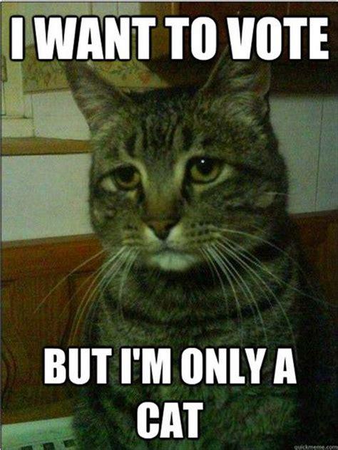 Voting Meme - cat election 2012