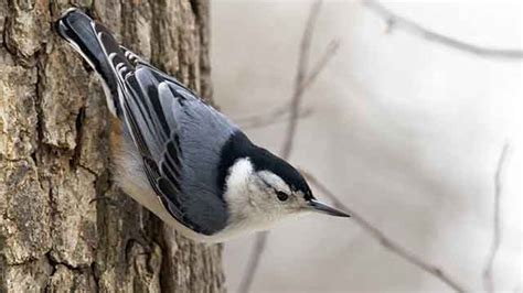 backyard birds ontario have you got 15 minutes to be part of something big