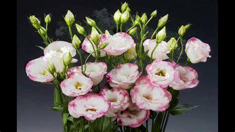 image gallery las rosas mas lindas las flores m 225 s lindas y raras del mundo productora kikito