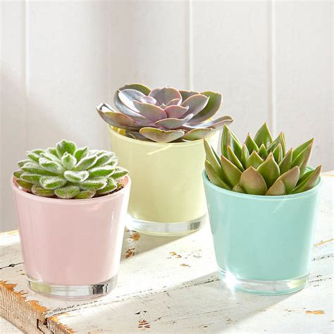 cute succulent pots planters 2017 cute pots for succulents ideas succulent