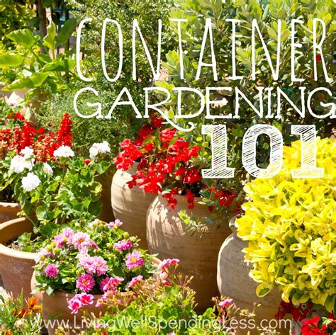 container vegetable gardening tips container gardening 101 container gardening container vegetable gardening gardening 101