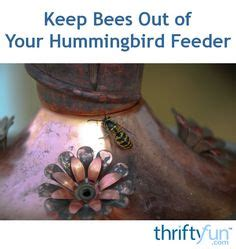 Keep Bees Out Of Hummingbird Feeder 1000 images about gardening on houseplant to grow and lawn