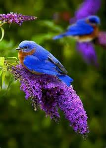 blue colored birds blue abd yellow color bird birds trendyoutlook