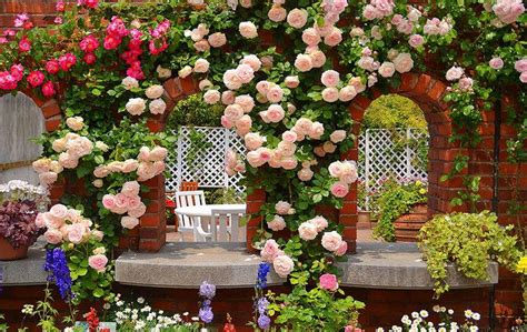 rose themes new roses garden wallpaper android apps on google play