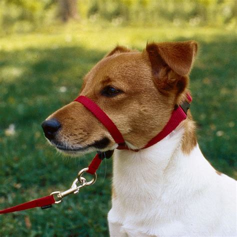 gentle dogs gentle leader headcollar petsolutions
